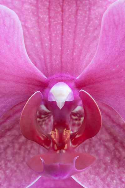 Lipperose 2