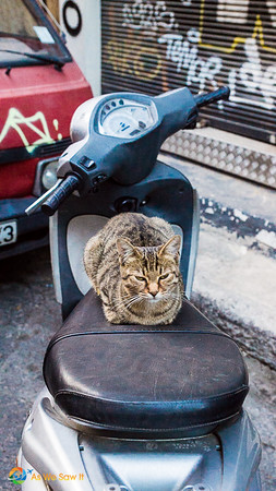 Cat on Motorcycle, Athens
