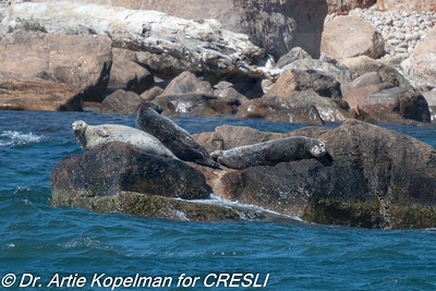 CRESLI/Viking Fleet Seal Cruise 2018-04-21