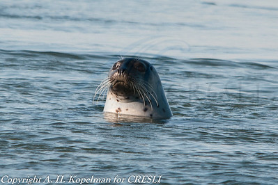 CRESLI seal walks, cruises, and research