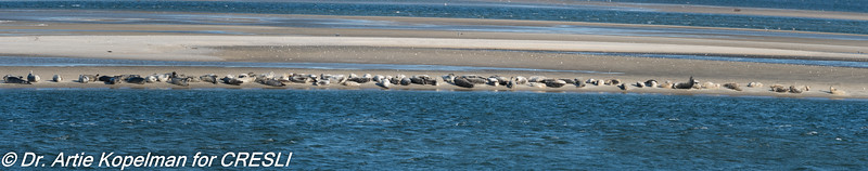 107 harbor seals