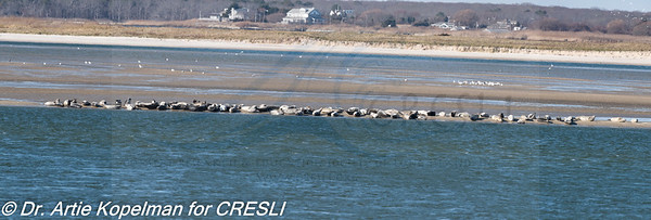 93 harbor seals