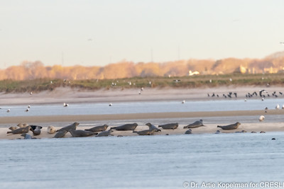 4 rremaining seals joined by 30 others