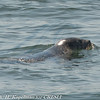 Seal Cruise 2013-04-27-North Fork Audubon Society :