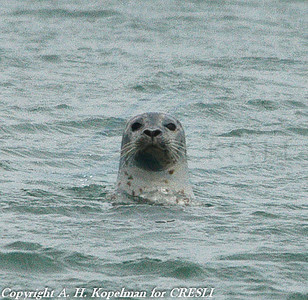 seal_walk154-Edit