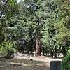 The cemetery is heavily wooded with wonderful large evergreens.