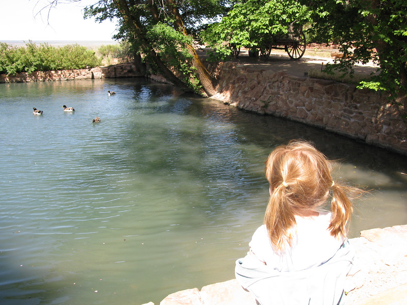 Madelyn watches ducks