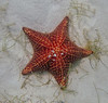 1st location Starfish, lots of starfish.