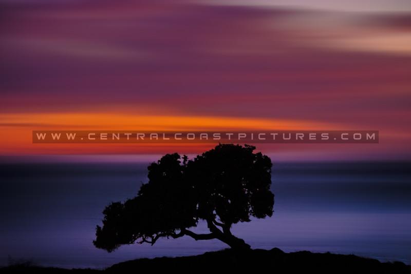 lone oak blur sunset 2401-