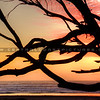 tree-sunset_7216