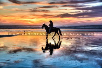 sunset horse-7380-