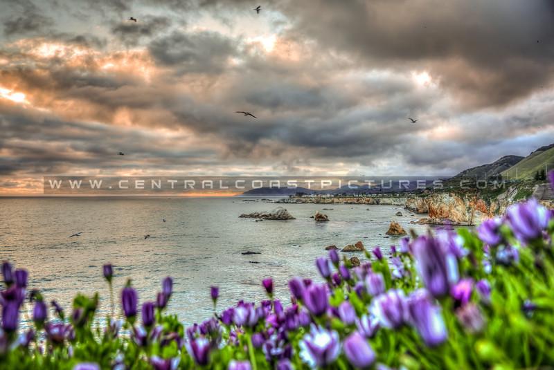 pismo shell beach cliffs 8503-