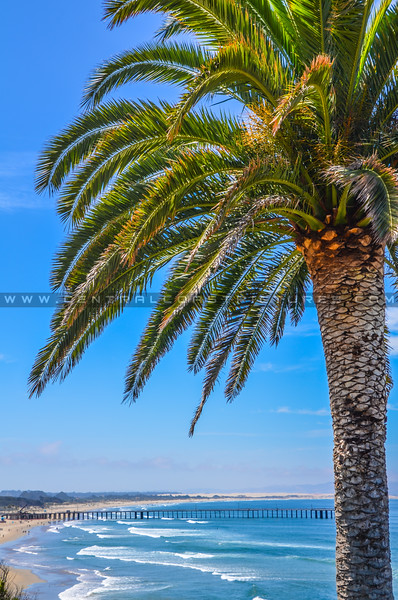 pismo beach-6929