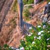 pismo pelican flowers-4638-