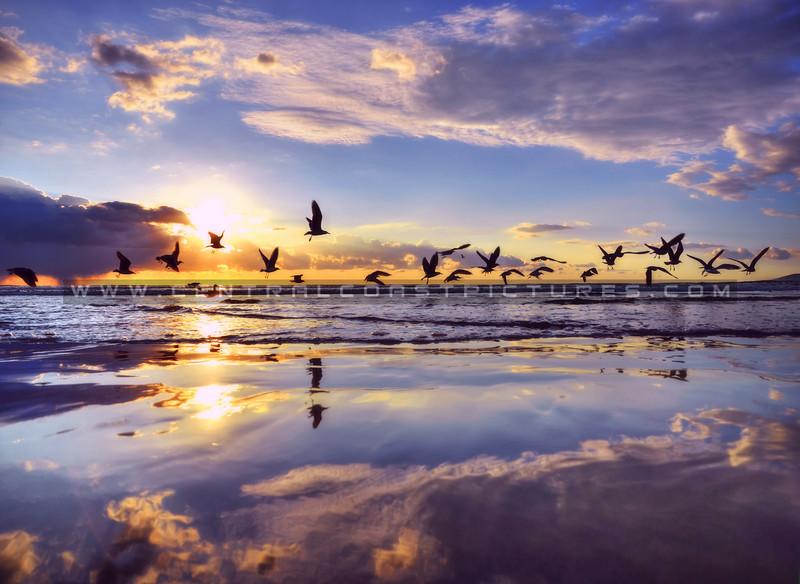 birds-reflection_3335