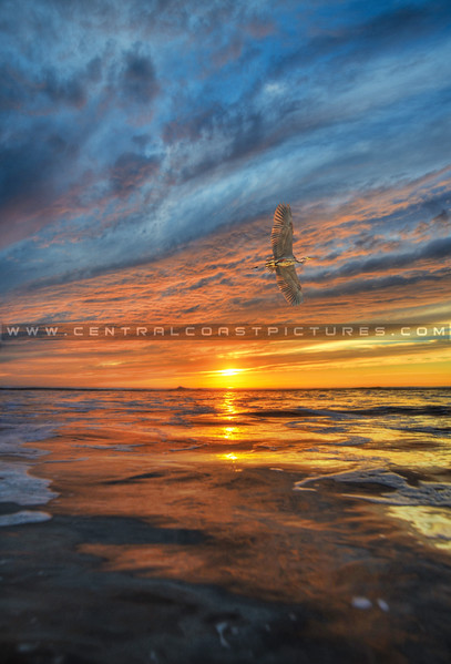 heron-flying-sunset-9256