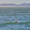 pismo dolphin 5138