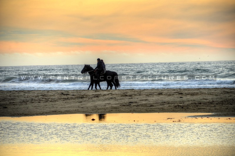 pismo-beach-horses_9670