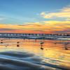 pismo-beach-birds_7782