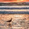 pismo sunset-bird-6315