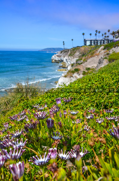 pismo beach cliffs-6899