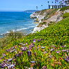 pismo beach cliffs-6899