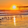 pismo beach birds 6919