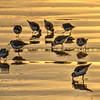 birds_7096