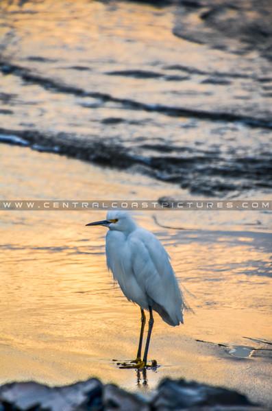 bird egret-3448