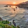 pismo pelican baby seagulls-4625-