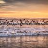 pismo birds 7984-