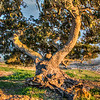 lone tree pismo preserve 2146-