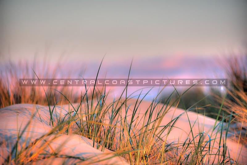 pismo dunes 6022-