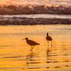 pismo beach birds 6909