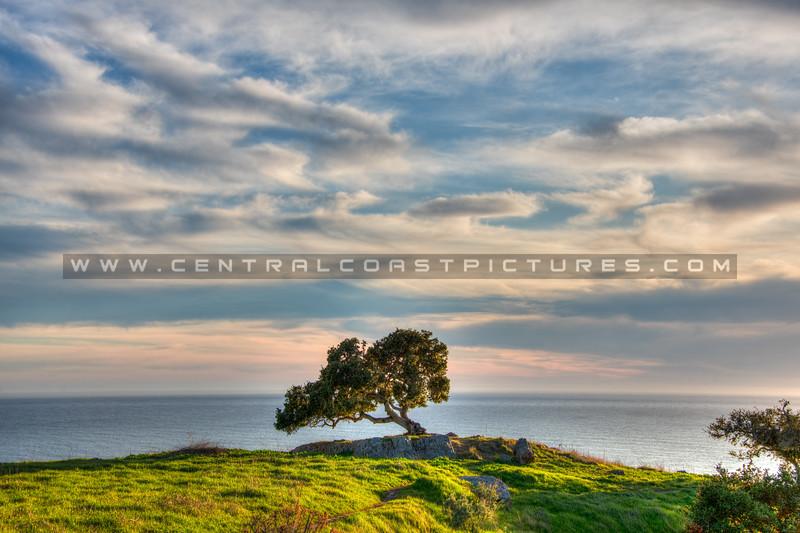 lone tree pismo preserve 2103-