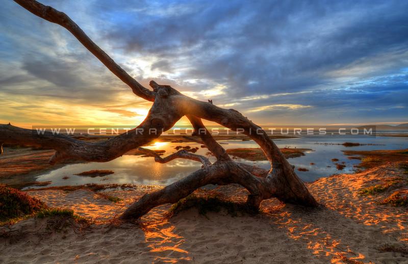 pismo-north-beach_9845