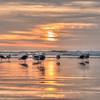 seagull sunset 7356