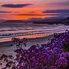 pismo sunset flowers-4807