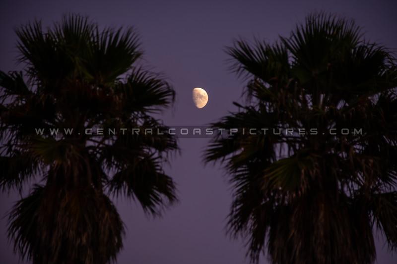 moon palm trees 6057