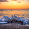 shell beach splash 1570-