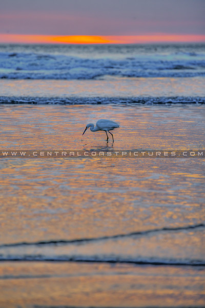 pismo egret sunset 0500