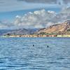pismo pelicans coastline 7634