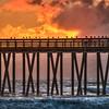 pismo beach pier birds 0767-
