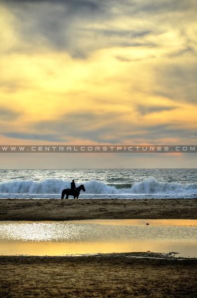 pismo-beach-horses_9665