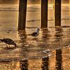 pismo pier seagulls 2691
