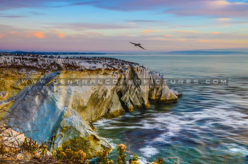 shell beach rock-5628