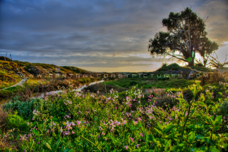 pismo butterfly trail 7989