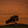 pismo preserve lone tree 2211-