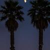 moon palm trees 6053
