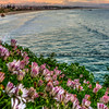pismo shell beach cliffs 8540-